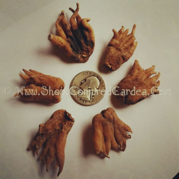 Large Lucky Hand Root-Hoodoo-Voodoo-Witchcraft-Luck, Business, Money,  Protection, Love